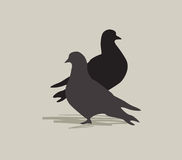 Two birds in love. Dove silhouette. Peace symbol. Stock Photography