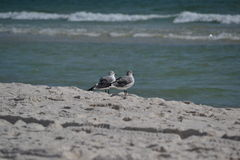 Two birds near shoreline on the beach Royalty Free Stock Photography