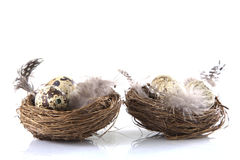 Two birds nest Royalty Free Stock Photography