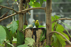 Two birds Stock Photo