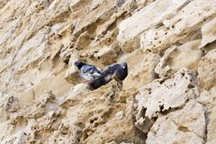 Two birds on a rock. Beautiful Royalty free stock photo. two birds rest on Rocky ground stock photos