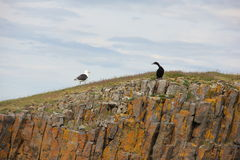 Two birds on the rocks Royalty Free Stock Photo