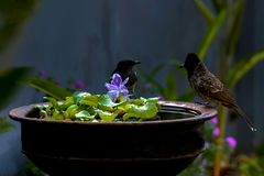 Two birds and the same pot of water pool royalty free stock photo
