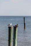 Two Birds on Sea Posts Royalty Free Stock Photos