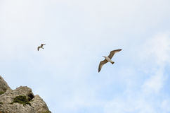 Two birds Seagull in the sky on the background of clouds stock photo