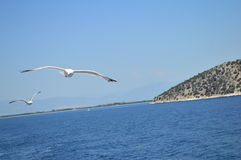 Two birds seagulls flying above the sea Stock Photography