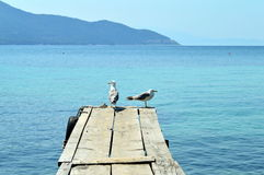 Two birds seagulls standing on a pier. Two birds seagulls standing on a wooden pier Royalty Free Stock Photo