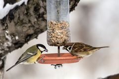 Two birds on the self made feeder Royalty Free Stock Photo