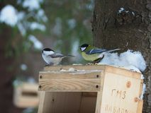 Two birds sitting on the birdfeeder. Two small birds sitting on the top of birdhouse looking for food Stock Photo