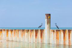 Two birds sitting on a metal wave breaker Stock Photography