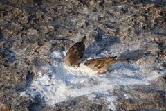 Two birds standing on white sand. royalty free stock images