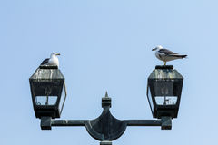 Two birds on a street lamp Royalty Free Stock Photography