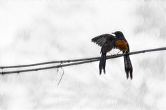 Two birds take care of each other in the rain Royalty Free Stock Images