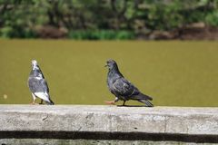 Two birds talking royalty free stock image