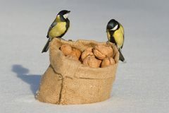 Two birds titmouse sitting on a bag of nuts Royalty Free Stock Image