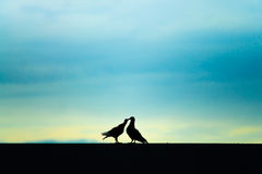 Two Birds together. 2 birds love together with silhouette light Stock Photo