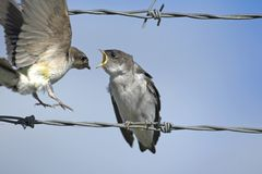Two birds on a wire Stock Photo