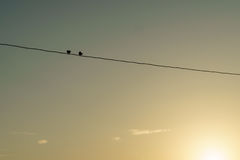 Two birds on wire. Royalty Free Stock Images