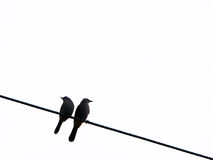 Two birds on the wire Stock Image
