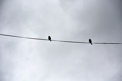 Two birds on a wire. Surrounded by impressive haunting morning clouds in Vic-sur-sere, France Stock Photos