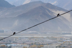 Two birds on the wire Stock Photo