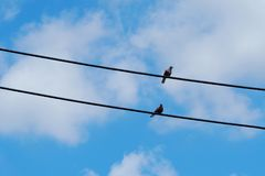 Two birds are on the wires. Beautiful sky background.  Stock Photo