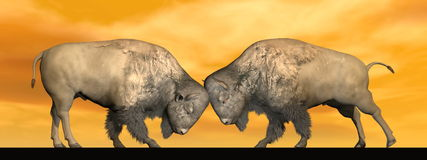 Bison fight - 3D render. Two bisons fighting head against head in orange brown background Royalty Free Stock Images