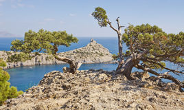Two bizarre forms of juniper growing on a rock.New Light. Crimea Stock Photography