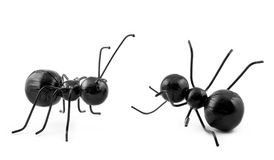 Two Black Ants Concept Stock Images