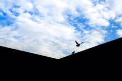 Two Black Birds Stock Photos