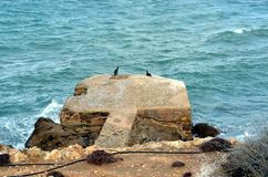 Two black birds relaxing on rock in the sea stock image