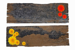 Two black and brown wood boards with gerbera flowers. On white background Royalty Free Stock Photography