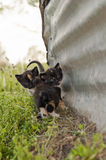 Two black calico kittens by a barn Stock Photos
