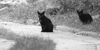 Two black cats. Staring to something on a road royalty free stock photography