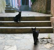 Two black cats in an alley of Orvieto. Orvieto,Italy-July 28, 2018: Two black cats in an alley of Orvieto royalty free stock images
