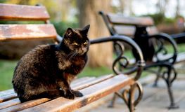 Two black cats with green eyes are sitting on park benches stock illustration