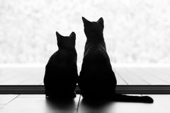 Two black cats looking out of the window stock photos