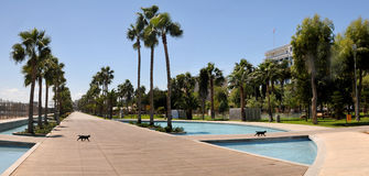 Two black  cats in modern promenade -  Limassol, Cyprus Royalty Free Stock Photos