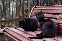 Two black cats on the red bench Stock Photography