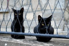 Two black cats. Behind the fence stock images