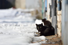 Two black cats are walking in the street on a winter day.  royalty free stock photography