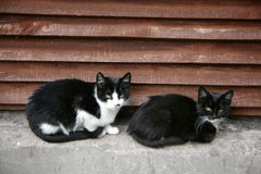Two black cats in a yard. Two black cats sit in a yard stock photo