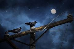 Two black crows. Two black crows sitting on a telephone pole with the signs of high danger in orange gazing at the moon on a dark and stormy night Stock Image