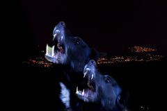 Two black dogs that howl. Two black howling dogs that resemble wolves Royalty Free Stock Photos