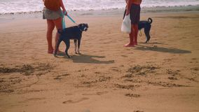 Two black dogs playing on beach. Two black dogs and owners playing with on beach with stock video