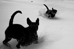 Dogs in snow. Two black dogs playing in the snow in monochrome Royalty Free Stock Photography