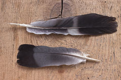 Two black feathers Royalty Free Stock Images