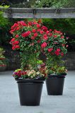 Two black flower planters royalty free stock photos