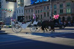 Two black horses with pink colored ornaments pulling white carriage stock photo