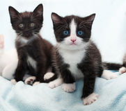 Two black kitten on blue Royalty Free Stock Images
